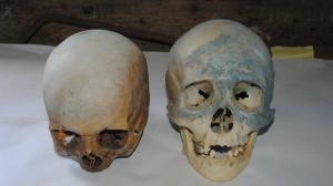 Stamford Skulls