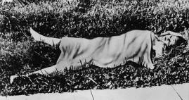 Crime scene photograph appearing in the newspapers.