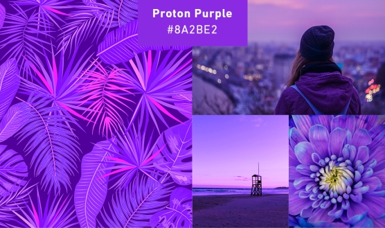 purple-collage
